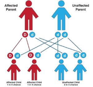 WVD Genetics
